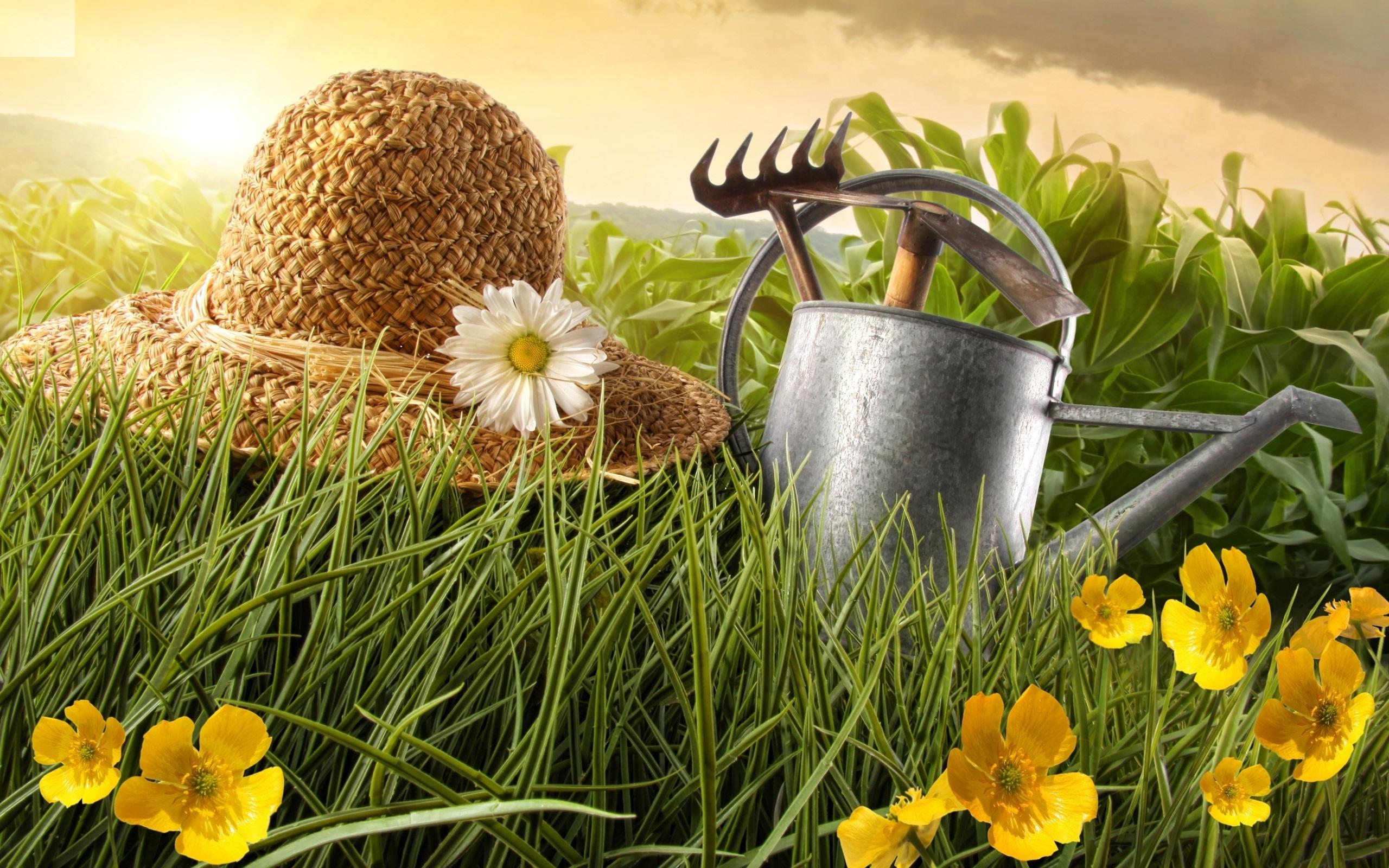 как сделать удобрение, советы на каждый день, все буде добре, лучшие советы, рубрика, огород, итак