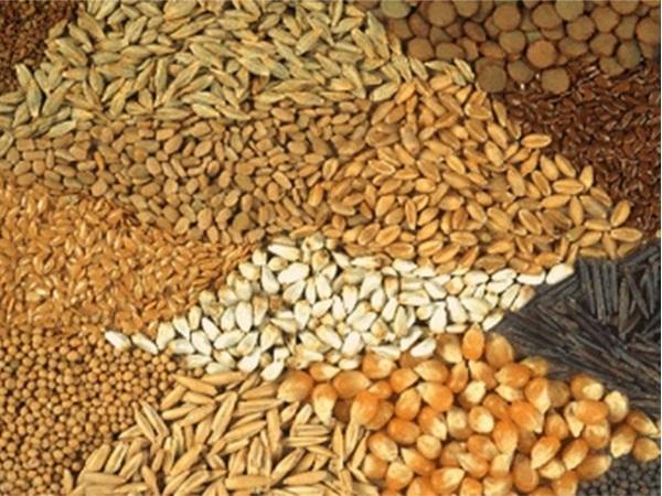 советы на каждый день, лучшие советы, как выбрать семена, ГОСТ, рынок, семена, упаковка, страна изготовитель