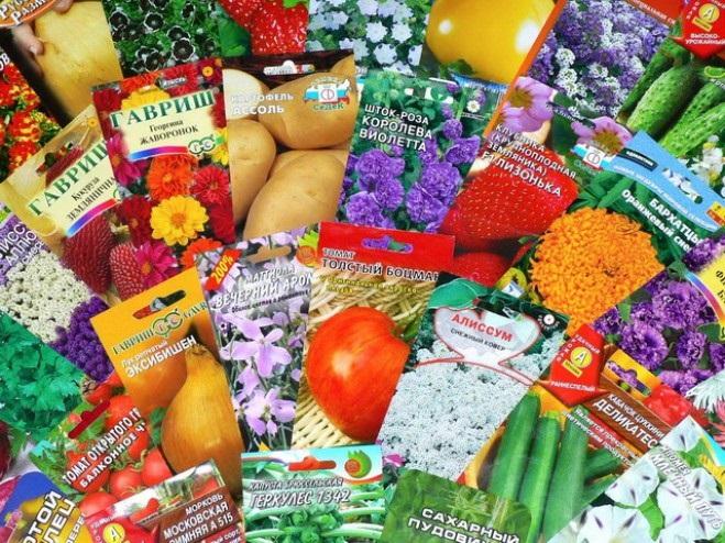 советы на каждый день, лучшие советы, как выбрать семена, рынок, семена, упаковка, страна изготовитель, ГОСТ